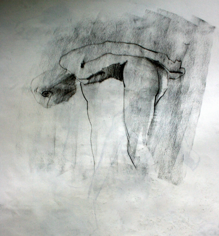 vine charcoal and charcoal pencil, 55x50 cm, 2014
